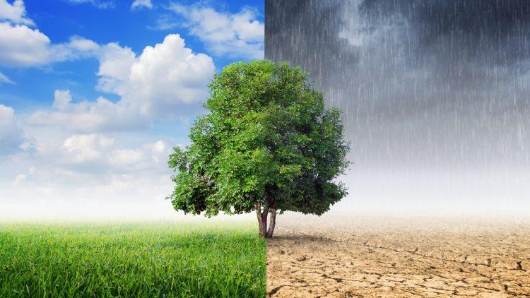 Cambio climático: señales del planeta